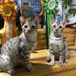 Я и мой брат Феликс! Мы звезды выставки оба дня!!