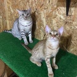 Isadora & Felix