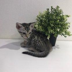 Камила 1,5 месяца